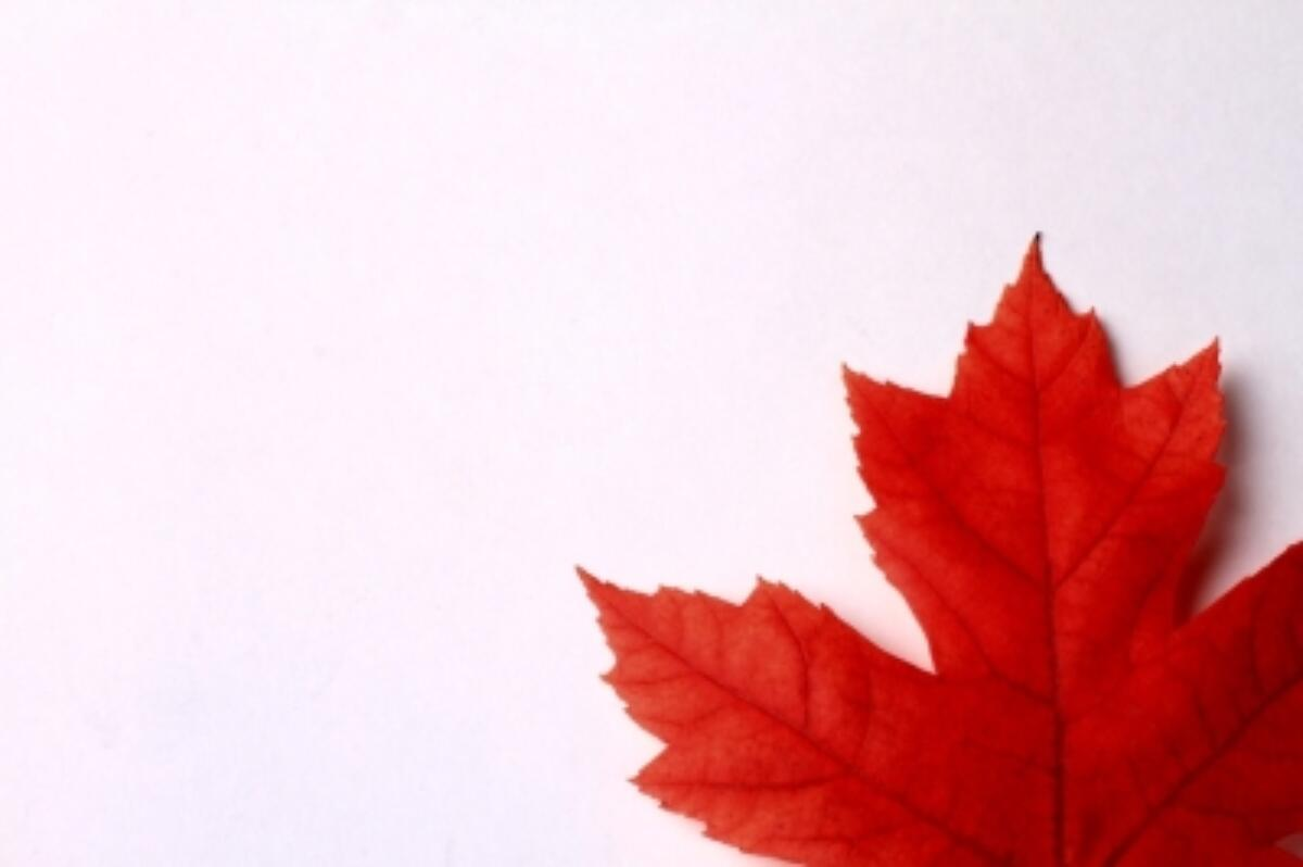 Maple leaf canada