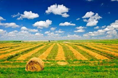 A wheat field at harvest time in Saskatchewan, Canada