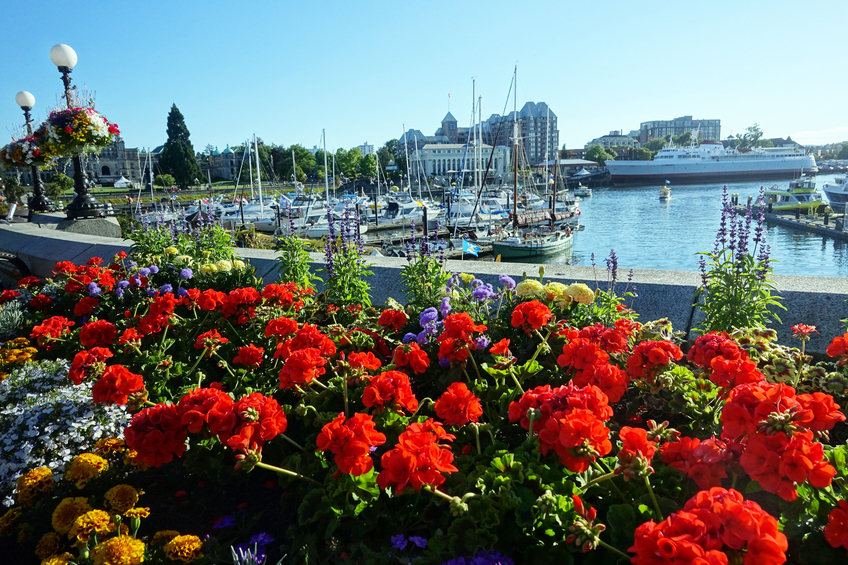 A view of the city of victoria with spring flowers.